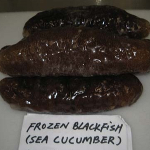 Top Quality Frozen and Dried Sea Cucumber for sale
