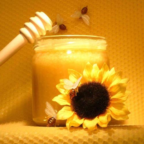 Natural Raw Bee Sunflower Honey from Europe Ukraine