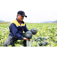 Factory Newly Pumpkin Price From Japan Supplier
