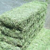 Cheap Alfafa Hay for Animal Feeding Stuff Alfalfa hay/alfalfa hay/high vitamin rabbit hay food for sale at best price