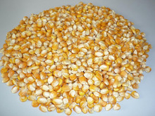 yellow corn for animal feeds