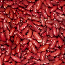Dried Red Square Kidney Beans for Sale Market Price