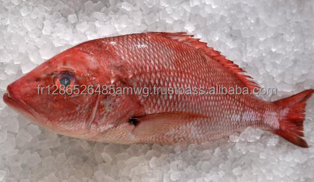 Frozen Red Snapper Whole/ Red Snapper Fillet/ Frozen Snapper fish