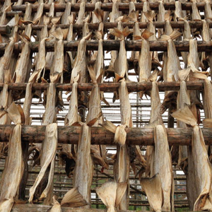 Stockfish - Dried fish - Cod & Tusk - Competitive prices, supply from Germany