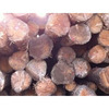 American Hard Maple logs