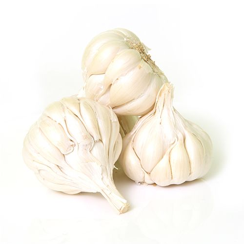 NATURAL FRESH GARLIC FOR SALE