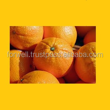 Wholesale high quality best oranges new crop 2018