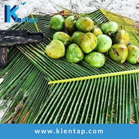 Vietnam Fresh Green Young Coconut - Kientap JSC