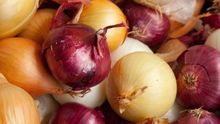 Wholesale Price of Fresh Red/Yellow/White Onions