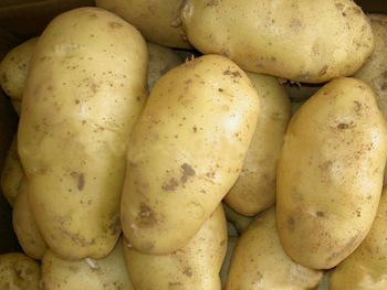Fresh Potato With Competitive Price