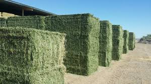 Alfafa Hay For Animal Feed for sale