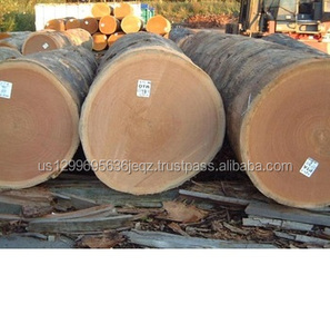 Timber raw logs for sale at cheap prices