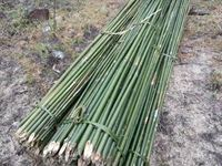 Vietnam natural high quality bamboo poles for sale