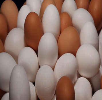 Fresh Chicken Table Eggs & Fertilized Hatching Eggs at affordable prices