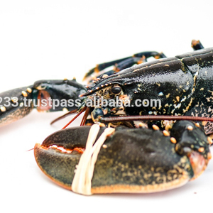 Blue European lobster