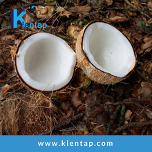 Semi husked Coconut Supplier from Vietnam - Kientap JSC