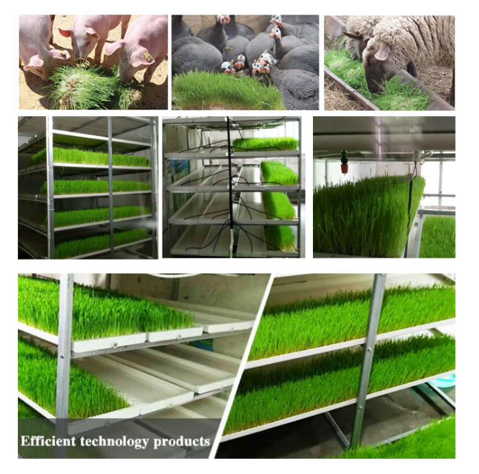 Agricultural Greenhouses Flat seed tray microgreen seed planter Hydroponic seed planter tray