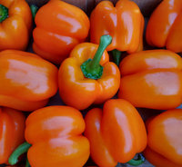 Quality Fresh Bell Peppers/Color Capsicum/Exotic Vegetables!