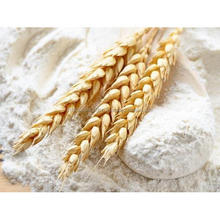 Durum Atta Wheat Fine Flour