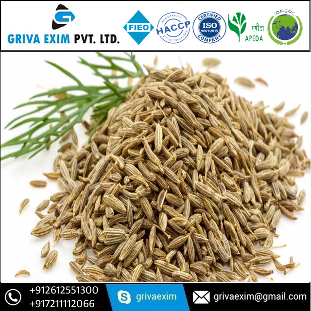 Export Quality Best Cumin Seed and Cumin Seed