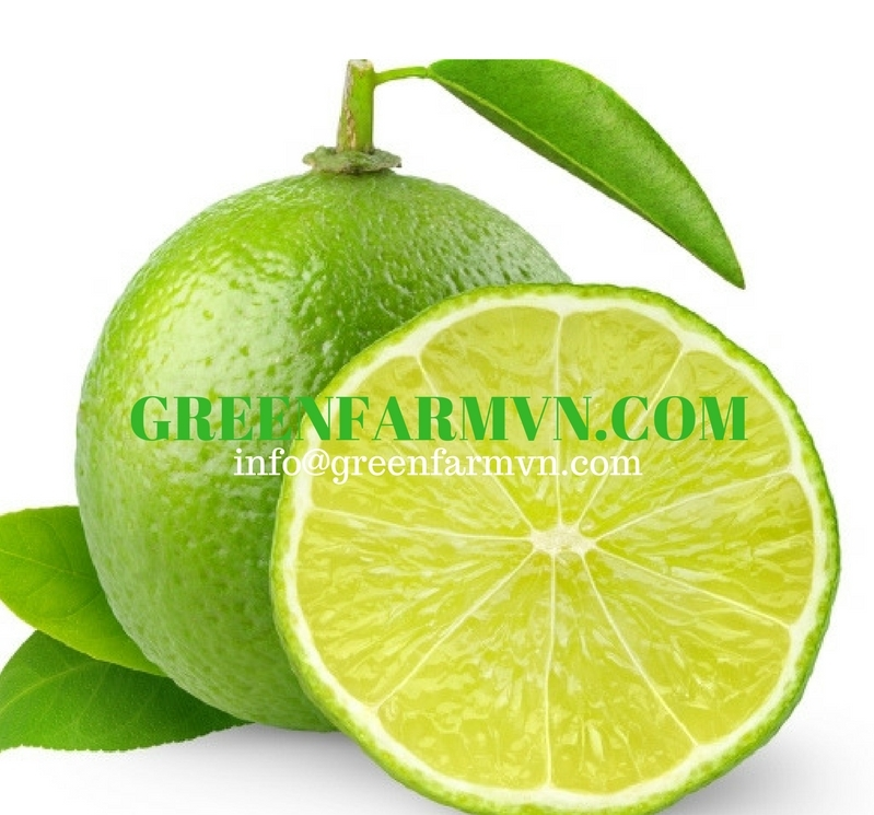 HIGH QUALITY FRESH GREEN LIME // FRESH SEEDLESS LIME// VIETNAMESE FRESH FRUITS