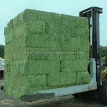 Cheap Rhodes Hay, Rhodes Grass Hay & Alfalfa Hay Animal Feed