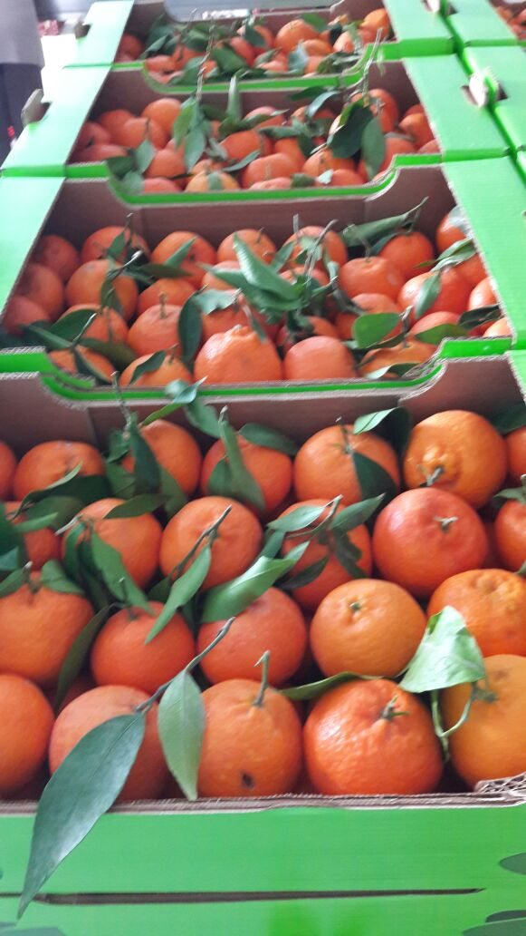 Sweet Fruit. Delicious Clementine. 7 kg Open Top Carton