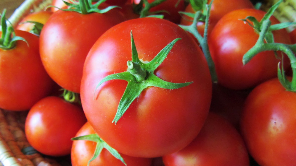 Brand new fresh tomatoes with low price