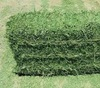 Wholesale High Protein Alfalfa Hay/Lucerne Hay In Bales