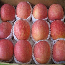 Delicious sweet imported Fresh red apples with wholesale price