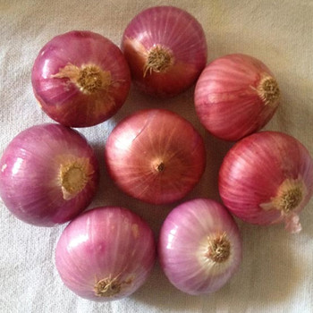 2017 Fresh Red Onion