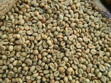 ARABICA AND ROBUSTA COFFEE BEANS FOR SALE
