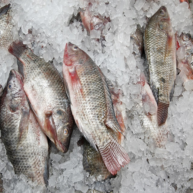 High Quality Seafood Product Red and Black Frozen Tilapia wholesale price