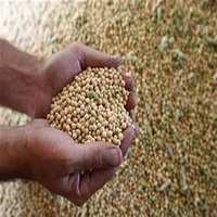 High Quality Wholesale Soybean For Animal Feed And Human Consumption
