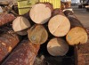 Good Quality Grade A/B/C Spruce Logs/Timber for Sale