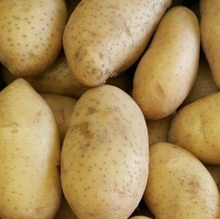 Fresh egyptian Potatoes high quality Class 1