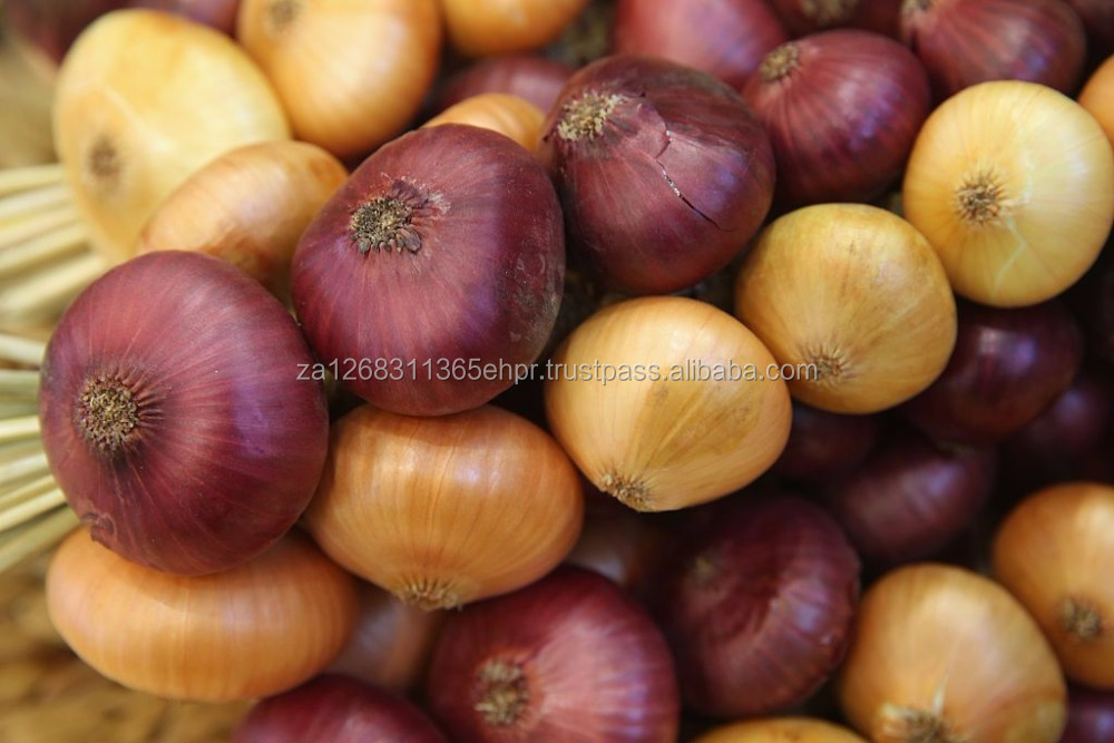 FRESH RED ONIONS, FRESH YELLOW ONIONS/FRESH WHITE ONIONS/FRESH BOWN ONIONS FOR SALE