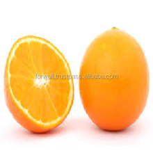 FRESH NAVEL ORANGE WITH HIGH QUALITY AND DIFFERENT SIZES