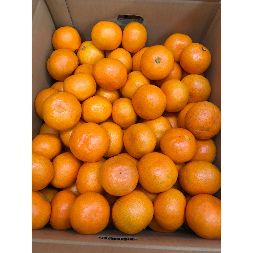 High Quality Fresh Mandarin Orange Made In Japan with Low Price