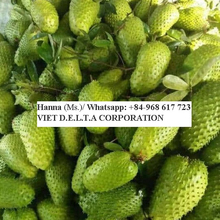 Fresh soursop fruit for exporters