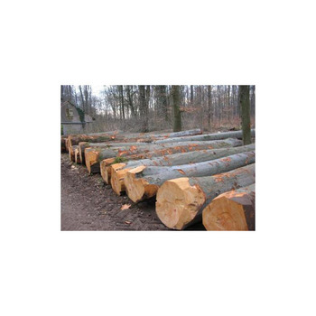 custom made 100% natural eucalyptus wood logs with suitable price