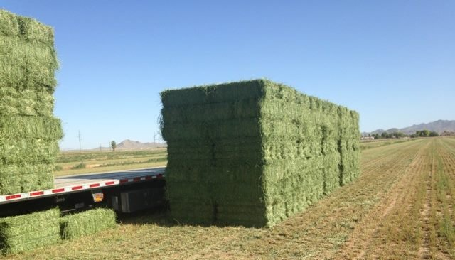 Bermuda Grass and other Animal feed for sale