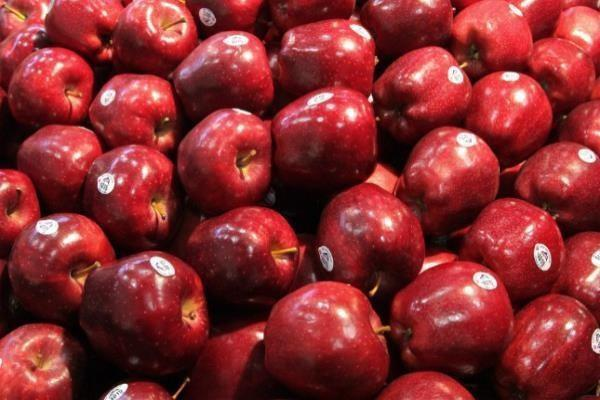 Red Color Fuji apple Fresh Style fruits fresh fuji apple fruit for sale Fuji apple exporter in USA.