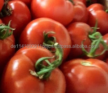 Fresh Tomato 6 cm available for export from Germany