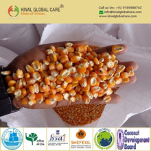 2017 Best Selling Yellow Maize