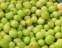 Vietnamese Best Price Fresh Apple Fruits