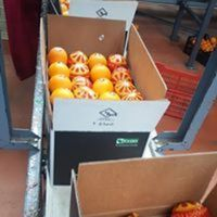 Fresh Citrus fruits from foodex company