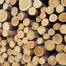 European Beech Round Logs for sale