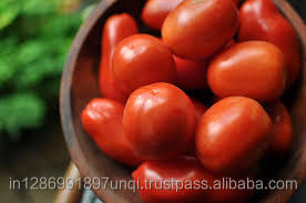 Fresh Tomato 6 cm available for export from India