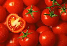 FRESH TOMATO / FRESH TOMATO AND TOMATO PASTE / FRESH GREEN & RED TOMATO